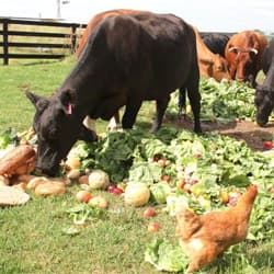 Animal Feed from Agricultural waste