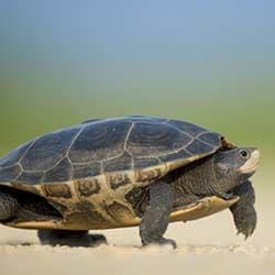 Reptiles & Amphibians Supplies
