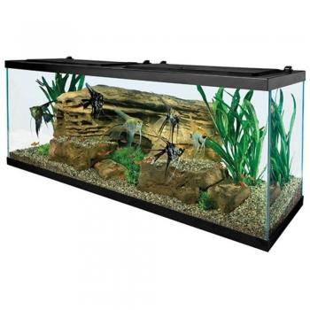 Aquarium Glass tanks