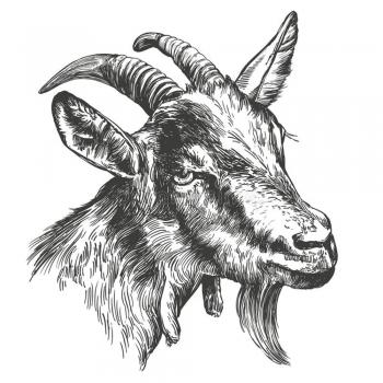 Animal illustrations wall arts