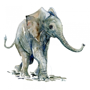 Water color baby elephants letters