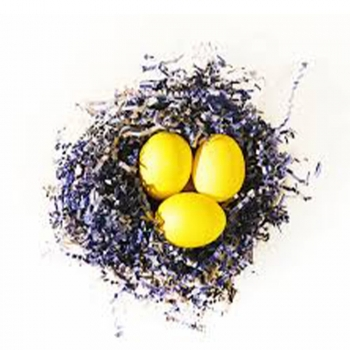 Paper Bird&s Nest with Blue Eggs