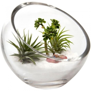 Terrarium Bowls