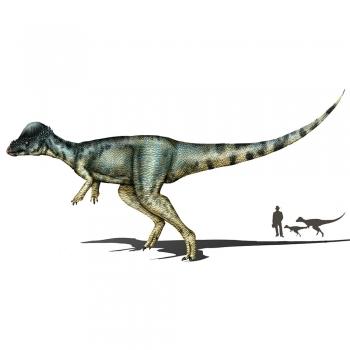Dinosaurs Prehistoric Creatures